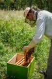 Working apiarist Royalty Free Stock Photo