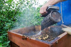 Working Apiarist. An apiarist spraying smoke into a beehive Stock Photo