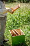 Working apiarist. In a spring season Stock Photo