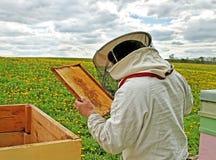 Working apiarist. Working apiarist in a spring season Royalty Free Stock Image