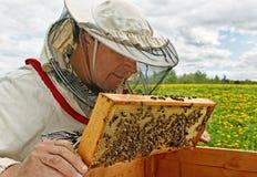 Working apiarist. Working apiarist in a spring season Stock Photos