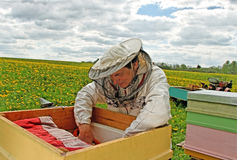 Working apiarist. Stock Images