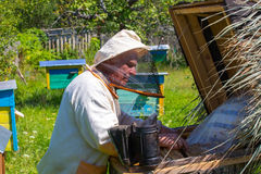 Working apiarist in a spring season. Royalty Free Stock Image