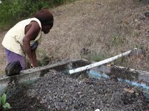 Working at an aquaponics pond in the windward islands stock video