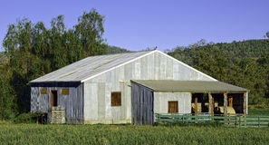 A Working Australian Woolshed royalty free stock photography