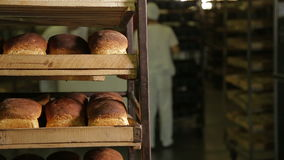 Working in a bakery stock video footage