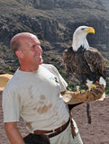 Working with a Bald Eagle. Trainer working with a majestic Bald Eagle at Palmitos Park in Gran Canaria, Spain. The Bald Eagle Haliaeetus leucocephalus is a bird stock image