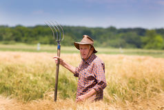 Working in barley field Royalty Free Stock Photography