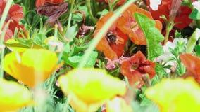 Working bee stock video