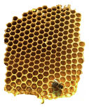 Working bee on yellow honeycomb Stock Image