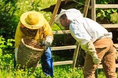 Working beekeeper Stock Image