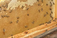 Working bees Royalty Free Stock Images