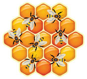 Working bees, vector. Working bees on honeycomb cells, vector stock illustration