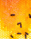 Working bees on honeycomb Royalty Free Stock Photography