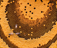 The working bees on the honeycomb. The working bees on the honeycomb with sweet honey Royalty Free Stock Photo