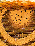 The working bees on the honeycomb. The working bees on the honeycomb with sweet honey Stock Images