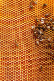 Working bees on honeycombs Stock Photo