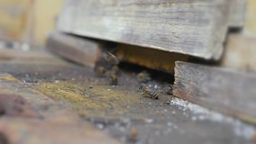 Working bees work honeycomb with honey. Royalty Free Stock Images