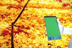Working on big mobile phone Stock Image