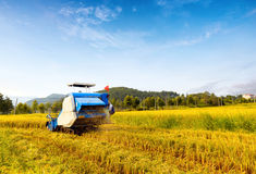 Working blue harvester Royalty Free Stock Photo