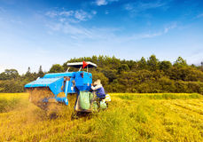 Working blue harvester Stock Images