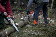 Working with chainsaw Stock Photo