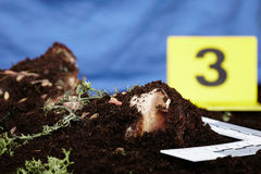 Working on collecting of fly larva on crime scene by criminologist Stock Image