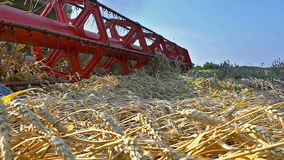 Working combine harvester to harvest wheat stock video footage