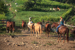 Working Cowgirl on Horse Farm. On a horse ranch in Linden, Virginia, a female cowgirl is saddled up and leading a group of horses into a side coral Royalty Free Stock Images