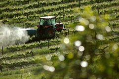 Spraying in Vineyards Stock Photo