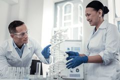 Scientists working with the DNA plastic model royalty free stock photography