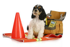 Working dog Stock Image