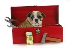 Working dog royalty free stock photo