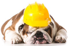 Working dog Stock Photos