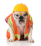 Working dog Stock Photo