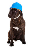 Working dog in helmet Stock Images