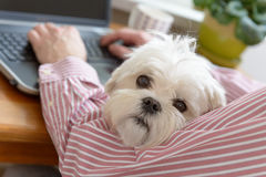 Working with dog at home Stock Images