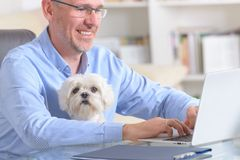 Working with dog at home or office. Man working at home or office and holding his liitle dog royalty free stock images