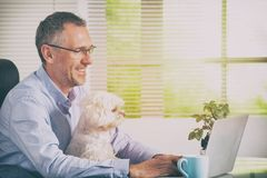 Working with dog at home or office. Man working at home or office and holding his liitle dog royalty free stock image