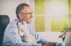 Working with dog at home or office. Man working at home or office and holding his liitle dog stock images