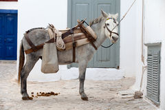 Working donkey stock images