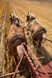 Working draft horses. Royalty Free Stock Image