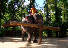 Working Elephant, Kerala, India Stock Photography