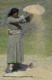 Working Ethiopian Woman 2 Royalty Free Stock Photography