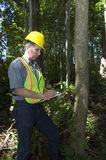 working för arbetare för skogsbrukmanträn Royaltyfri Fotografi