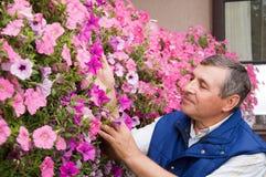 working för trädgårds- man för blomsterhandlare hög fotografering för bildbyråer