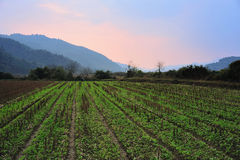 Working in the field with sunset. Wuyuan has many beautiful places, include fields everywhere with mountains Stock Photos