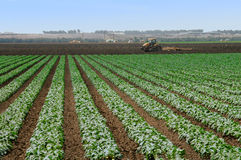 Working The Fields. A working farm in Salinas, California royalty free stock image
