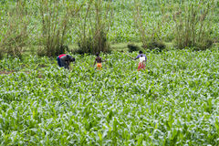 Working in the fields Royalty Free Stock Images