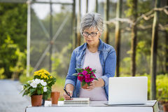 Working in a flower shop Royalty Free Stock Images